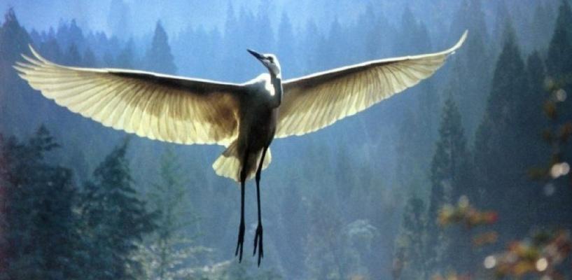 Омичей, которые в Большереченском зоопарке убили журавля и пеликана ради шашлыка, приговорили к реальному сроку