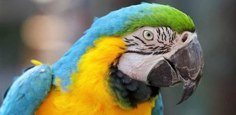 Из-за забывчивых хозяев в омской квартире едва не сгорел попугай