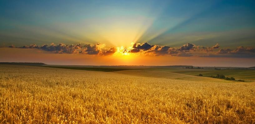 На пшеничном поле под Омском нашли мумию