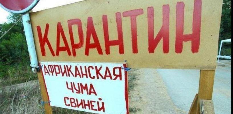 Распространением африканской чумы свиней в Омской области заинтересовался следственный комитет