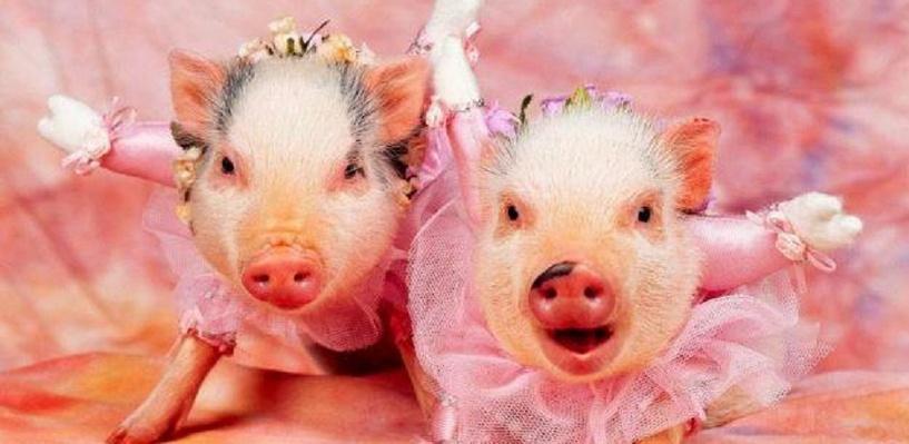 На свалке в посёлке Красный Яр под Омском нашли трупы свиней, умерших от африканской чумы