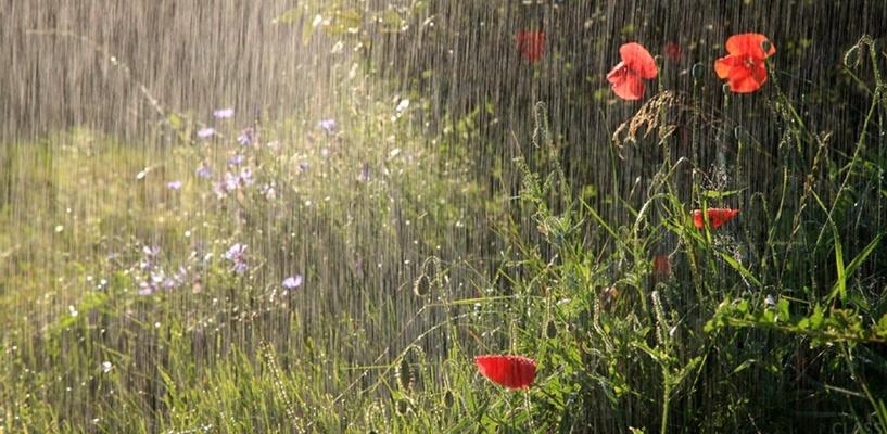 Омичей ждут прохладные и дождливые выходные