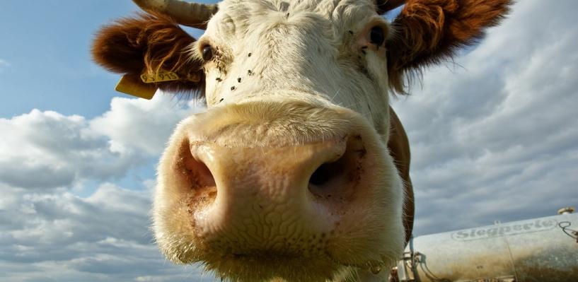 Омичка попросила у губернатора Назарова корову