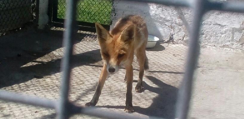 Администрация Большереченского зоопарка опровергла подозрения омичей в том, что животные голодают