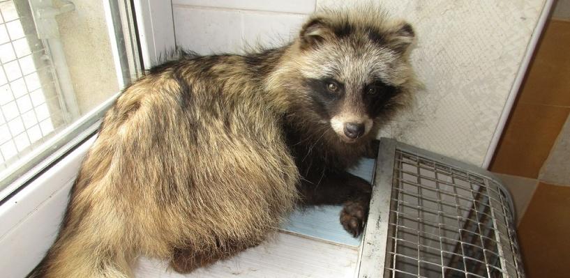 В омском приюте для бездомных животных «Друг» живет енотовидная собака Матрена