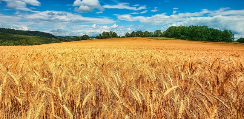 Урожаю в Омской области угрожают пыльные бури и засуха