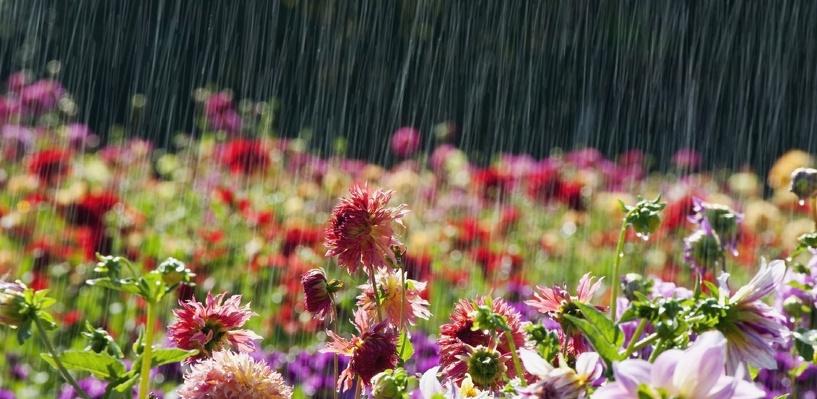 Выходные в Омске будут жаркими и дождливыми