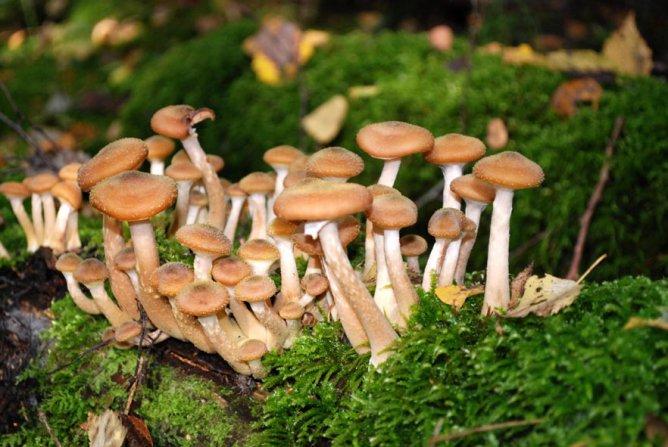 Роспотребнадзор рассказал, как не отравиться грибами