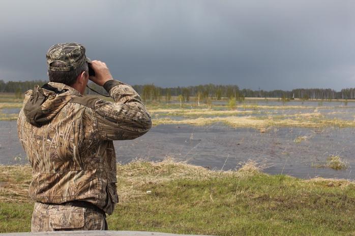 В Новосибирской области из-за омской чумы перестреляют диких кабанов