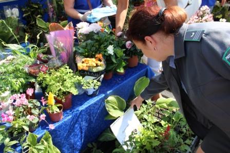 На омской выставке «Флора» изъяли 2500 растений