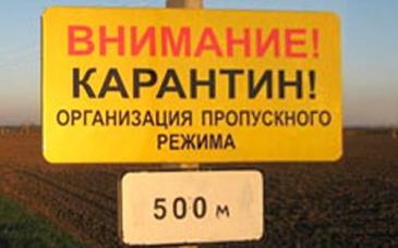 В Омской области вслед за чумой ввели карантин по бешенству