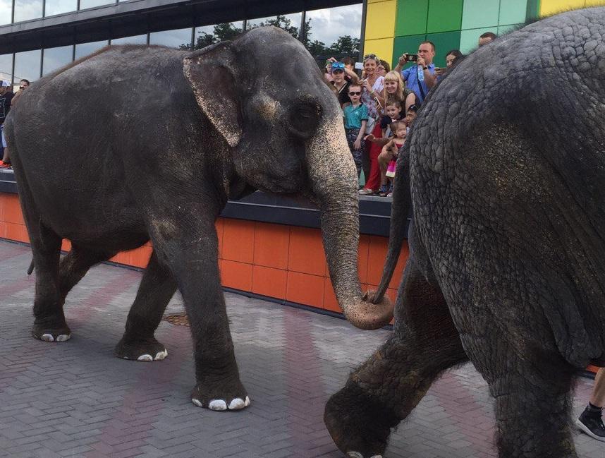 Омичам жалко слонов, которые ходили по городским улицам