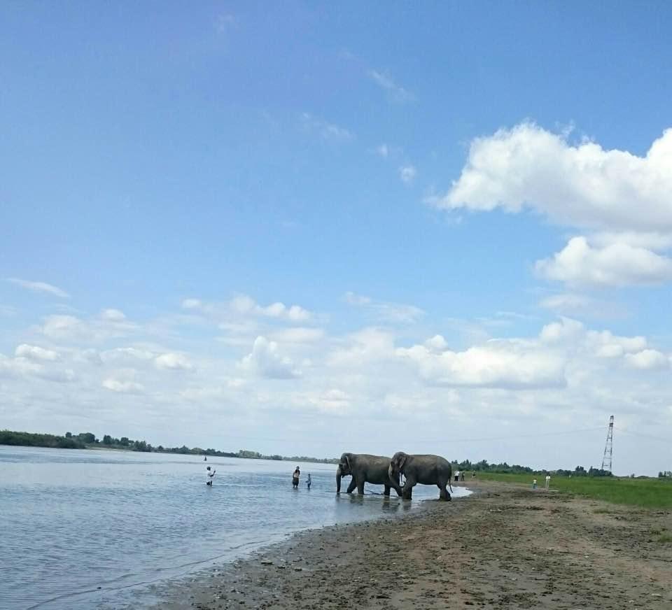 Индийских слонов из цирка искупали в Иртыше