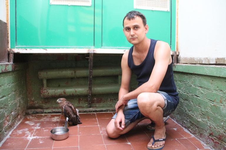 В омский экоцентр в сопровождении охраны привезли ястреба