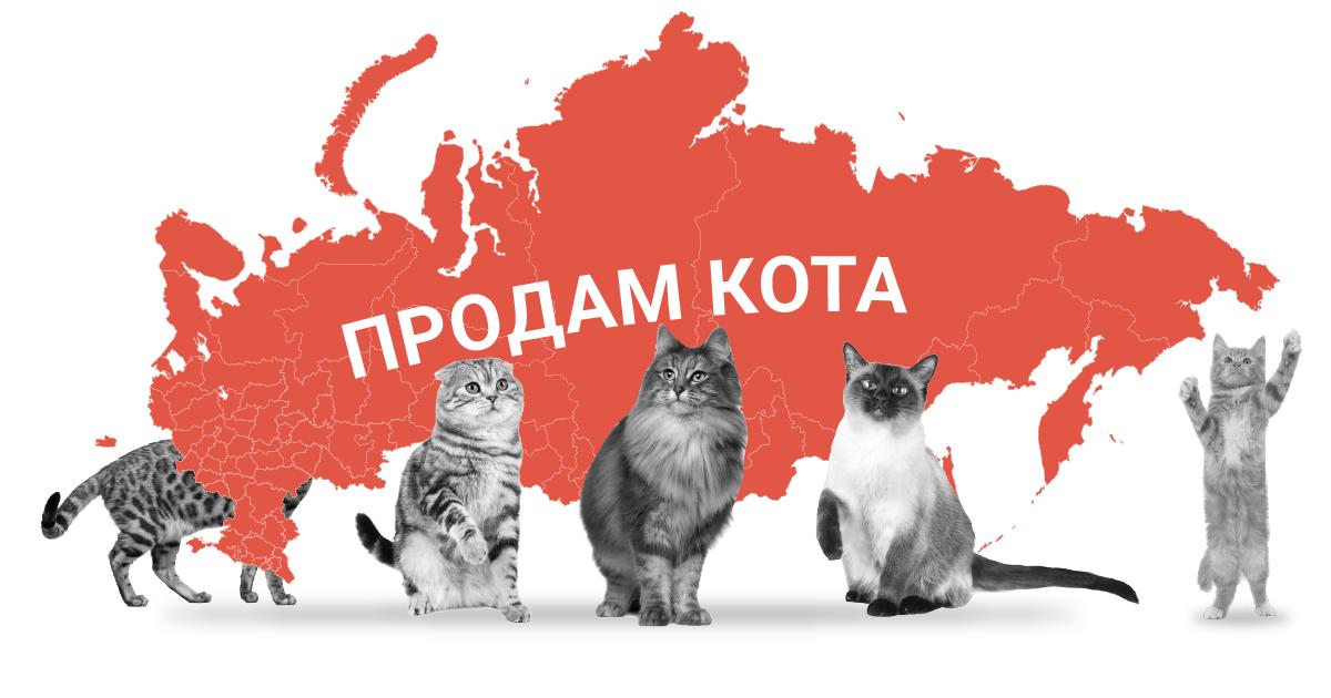 48% омичей предпочитают заводить беспородных кошек