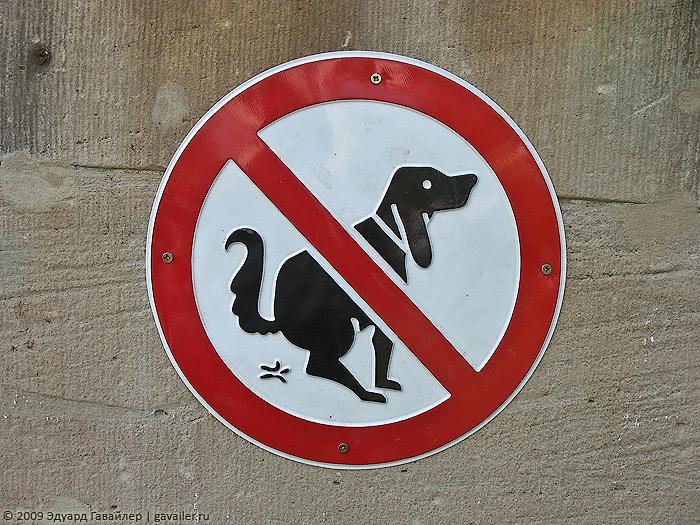 «Парк культуры и выгула собак»: омичи обсуждают активизировавшихся догхантеров