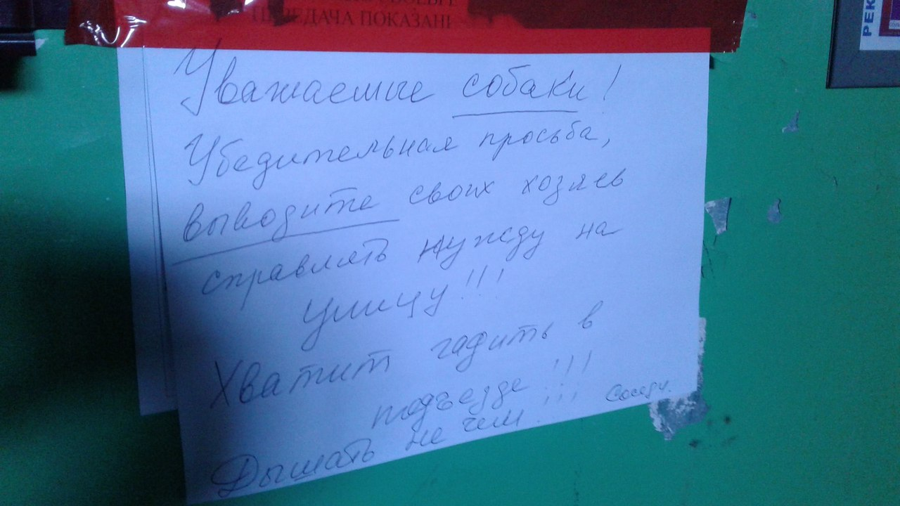Омич заметил в подъезде объявление, адресованное собакам