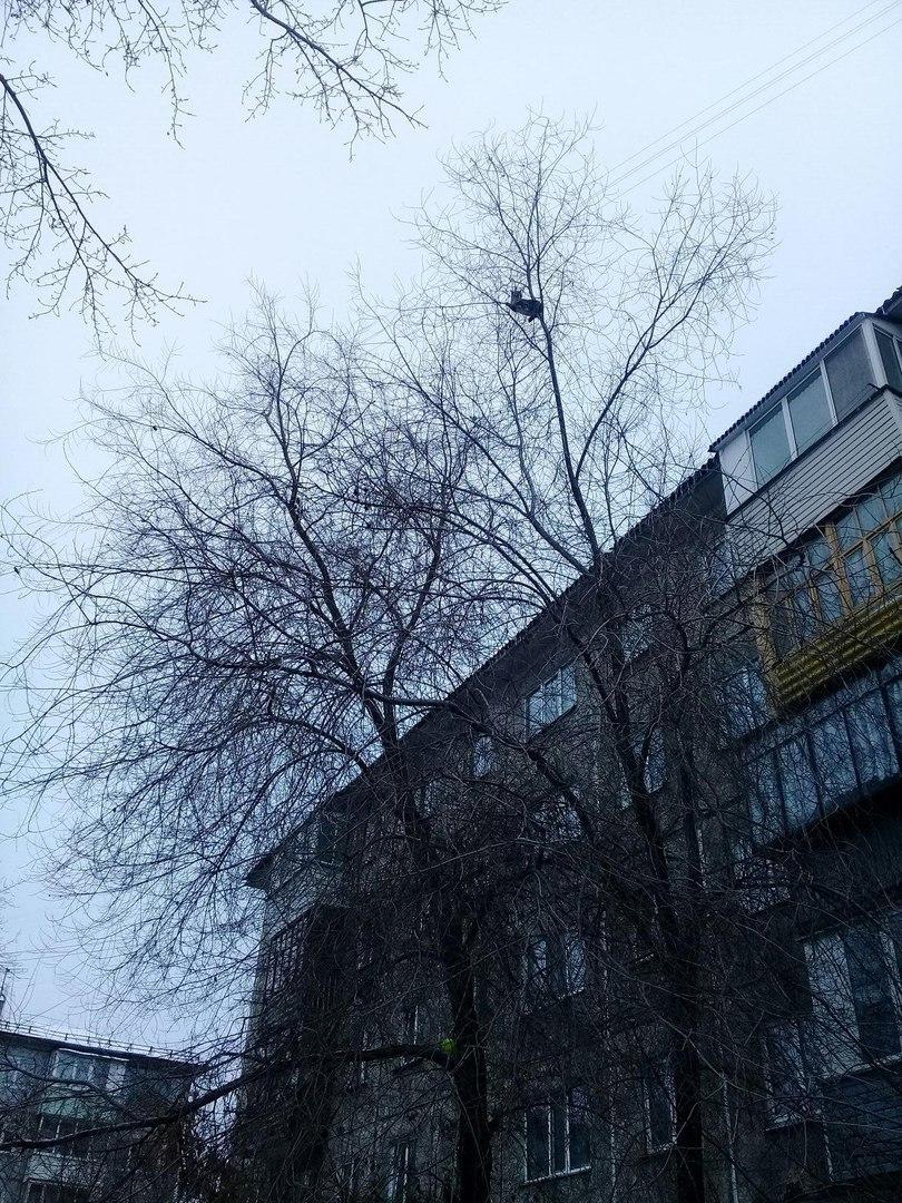 На 20-й Линии омичи сутки не могут снять кошку с дерева на высоте четвертого этажа