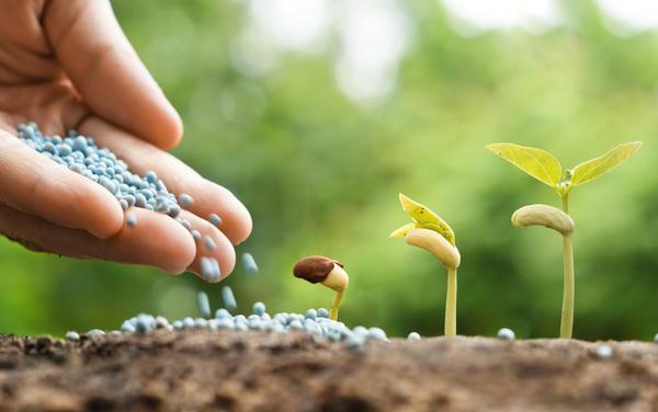 Разбрасыватель минеральных удобрений поможет повысить эффективность используемых угодий